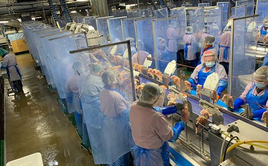  60名罗马尼亚工人在英国的肉类加工厂感染新冠病毒