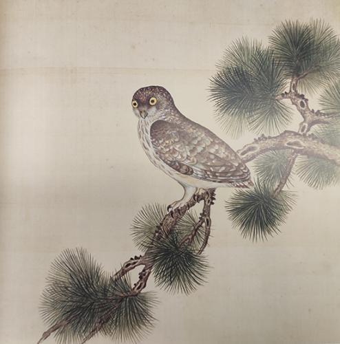 《给孩子的清宫鸟谱》中的鸮鸟。