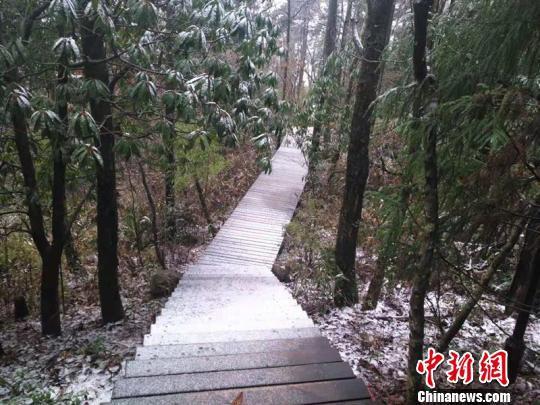 杭州临安天目山国家级自然保护区仙人顶迎初雪。 临安宣传部 摄