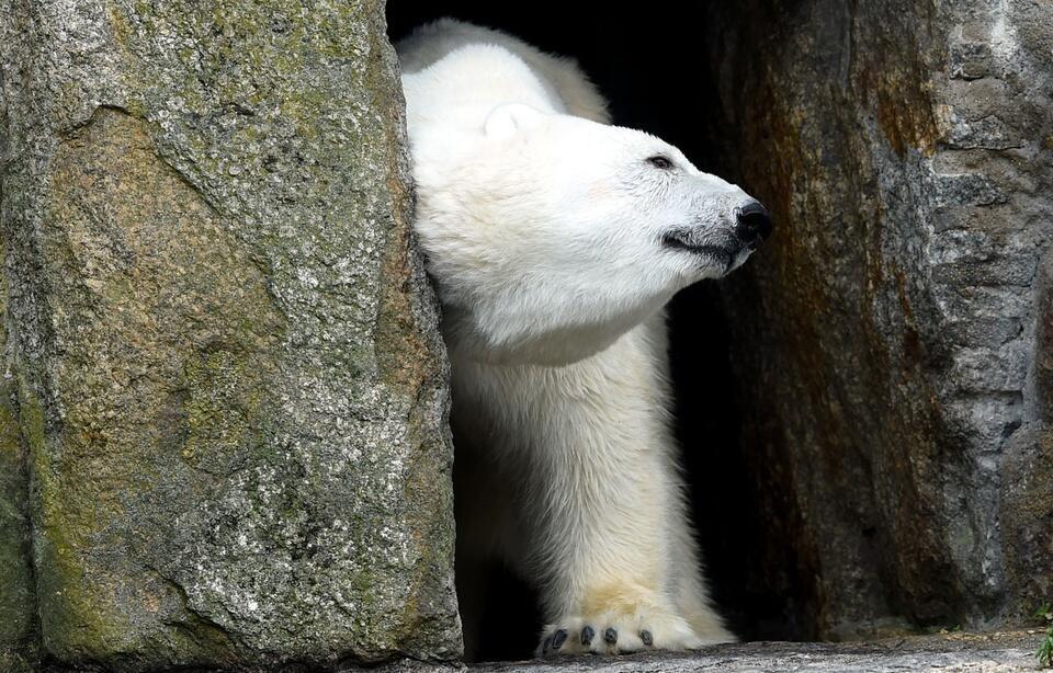 金沙国际娱乐网站:加拿大发生北极熊攻击人类事件_父亲为救孩子丧生