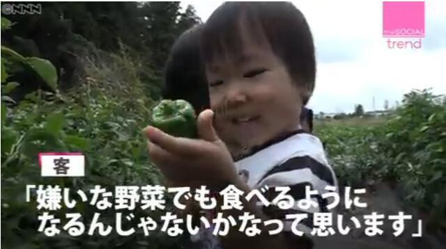 大通彩票怎么注册:日本出现新型无人蔬菜直销点?顾客自己采摘