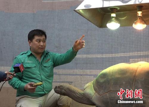 享受浴霸和太阳灯的象龟。<a target='_blank' href='http://www.chinanews.com/' >中新网</a>记者 刘超 摄