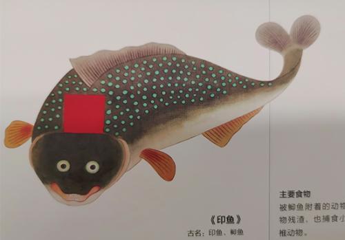 《给孩子的海错图》中的印鱼。