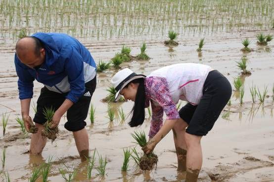时时彩手机app:中国外交官在朝鲜支农_周恩来曾参观该农场