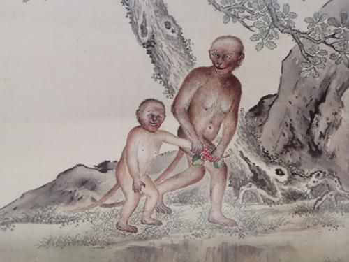 《给孩子的清宫鸟谱》中的猩猩。