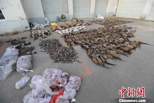被警方缴获的珍贵野生动物死体。警方供图