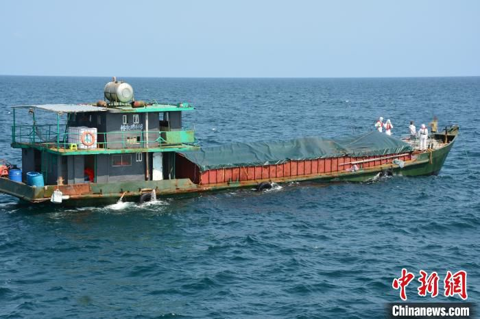 图为装载冻品船只。广西海警局提供