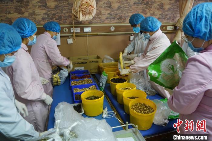西陵社区卫生服务中心工作人员分拣药材 李风 摄