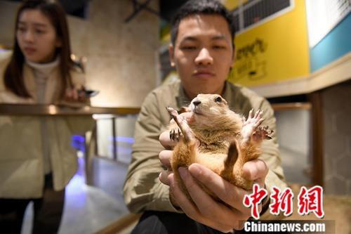 1月8日,广西南宁一室内动物观赏乐园内,饲养员与动物亲密互动。<a target='_blank' href='http://www.chinanews.com/'>中新社</a>记者 俞靖 摄