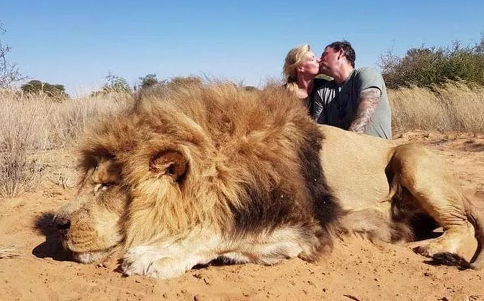 拿大夫妇猎杀狮子后在尸体旁亲吻拍照 引起公愤