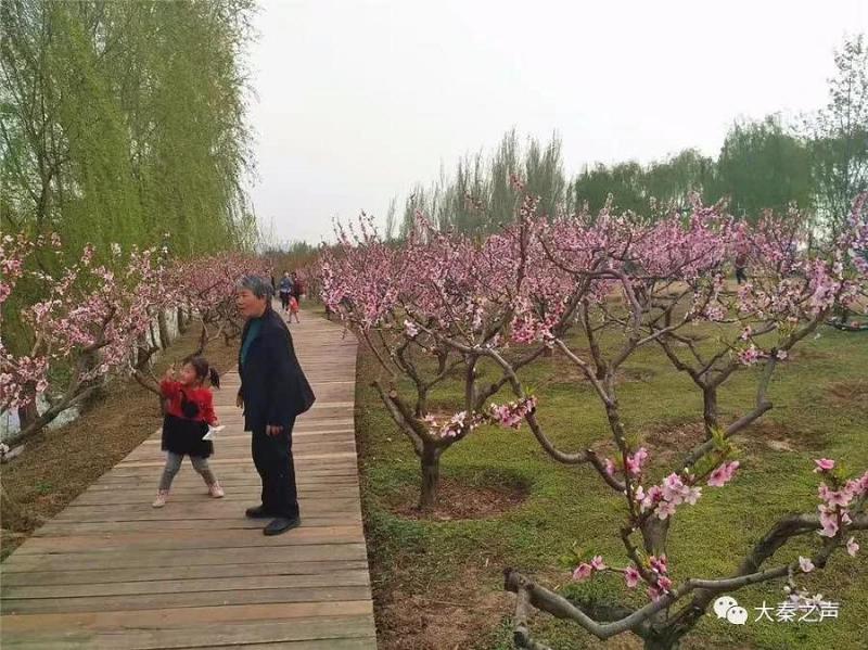 """北京赛车开奖走势图:西安赏花:拉长""""一枝花""""消费"""
