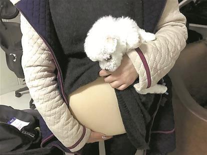 图为:女孩从假肚皮下拿出一只小狗