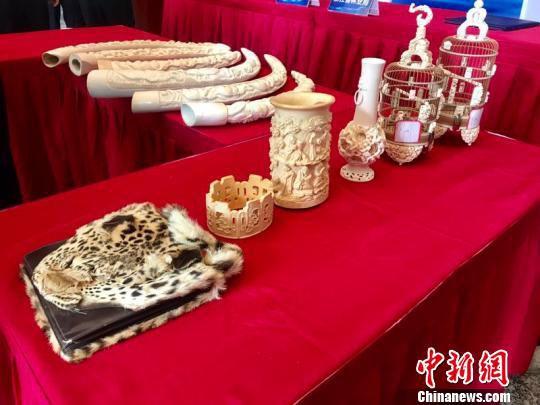 现场移交的象牙等濒危物种制品。 刘方齐 摄