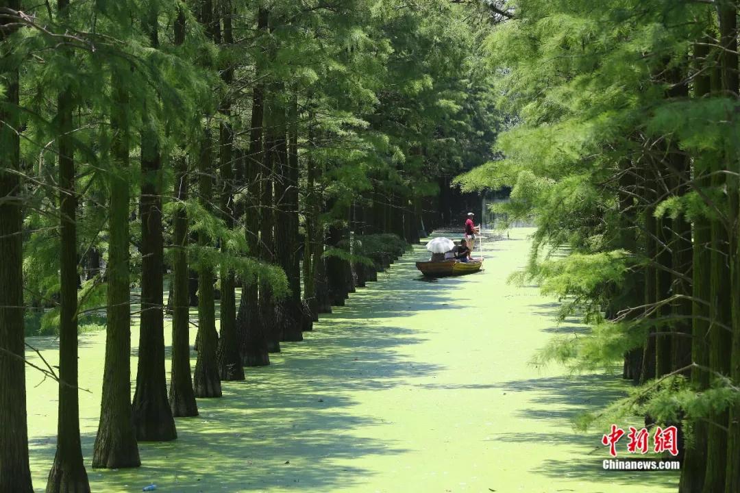 澳门新葡京电子游戏:美!隐匿在城市中的水上森林,每一张都是屏保