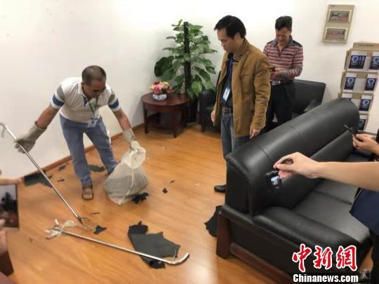 工作人员抓捕蟒蛇。 钟欣 摄