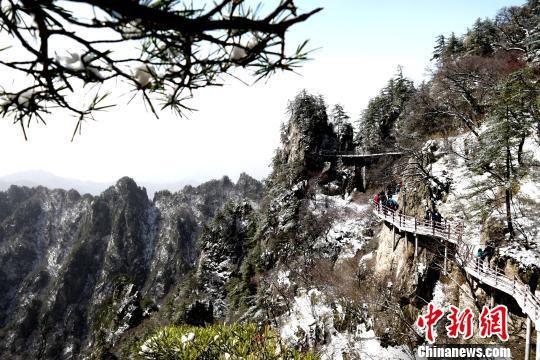 雪后老君山呈现峰林美景 王中举 摄