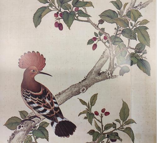 《给孩子的清宫鸟谱》中的戴胜。