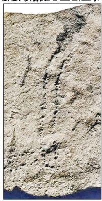 古生物足迹化石。图片来源:北京青年报