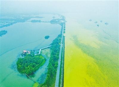 幸运快艇官方开奖记录:夏季无锡太湖淡黄色蓝藻泛滥_与水中环境污染有关吗?